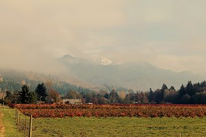 Blueberry Fields in Fall