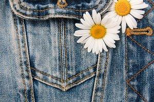 Daisy flowers  in jeans pocket