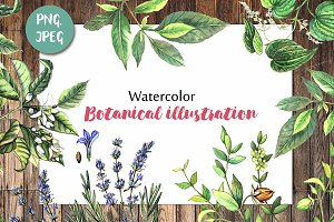 Watercolor botanical illustration