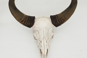 horns of brown animal hanging