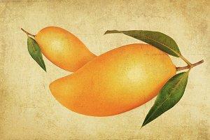vintage mango