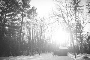 Winter Scene in Black and White