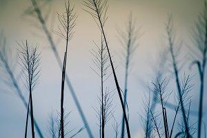 Rice Field II