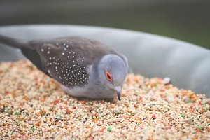 Bird Eating II