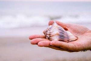 Holding Seashell II