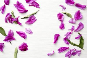 Floral Styled Stock Photography