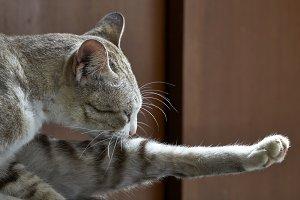 Cat cute funny