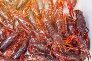 Brotherhood of crawfish