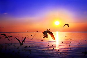 Colorful sunset with flock of bird