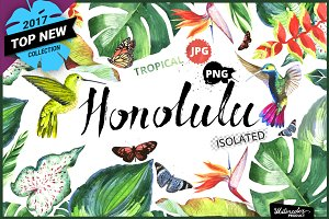 Tropical clipart PNG watercolor