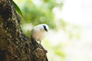 White Bird - Blue Beak