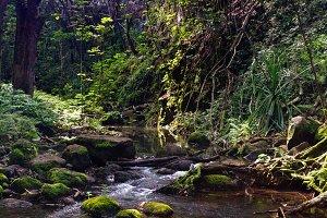 Small river on Kauai
