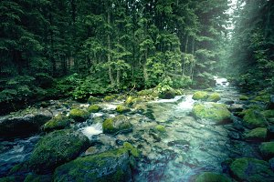 Mountain river in the dark forest.