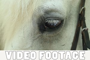 Horse eye close-up