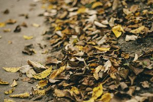 Dry Leaves