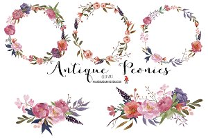 Antique peonies watercolor clipart