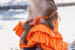 monkey in a dress meditating on the street
