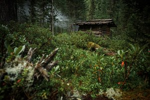 Old abandoned hunter's cabin