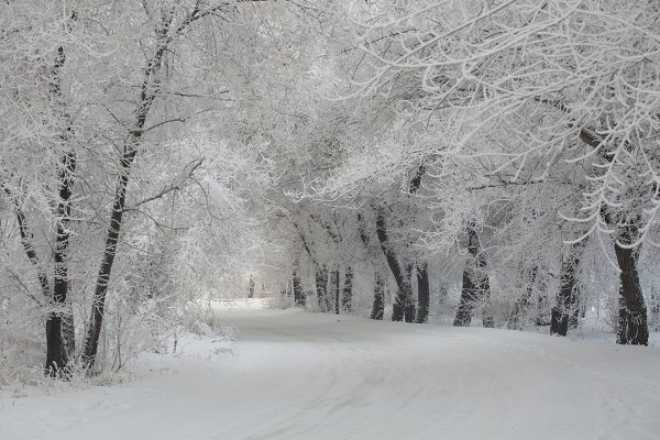 Amazing winter landscape with snow