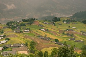 Panoramic Landscape of rice field