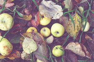 autumnal apples *SALE*