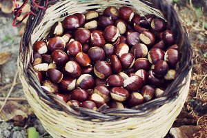 Chestnuts in a basket wickers.