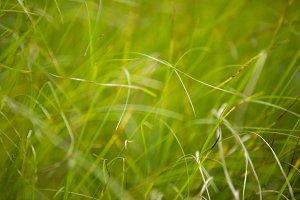 Green Grass #4