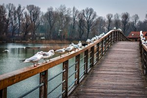 Bridge old danube