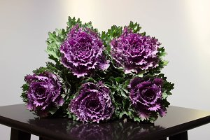 Bunch of decorative cabbage