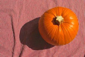 Pumpkin Picnic