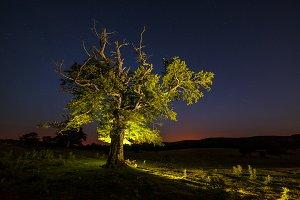 Lonely tree iluminated at night