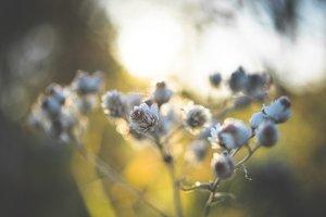 Winter flowers - Abstract grass #08