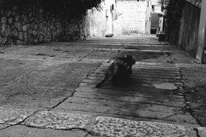 Run cat, run