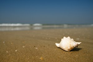 white seashell lying