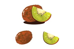 Kiwi Fruit Realistic Vector