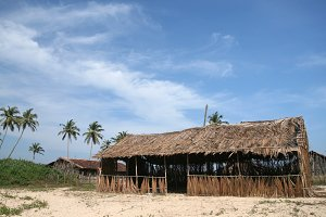 dried palm branches house
