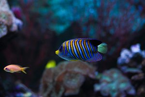 colored striped fish