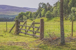 Wooden fence in Scotland