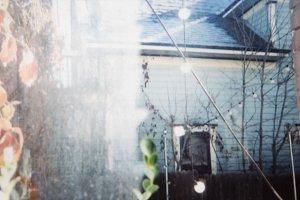 Polaroid of a Backyard