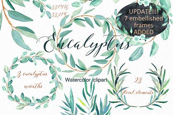 Eucalyptus Watercolor Clipart Illustrations On Creative Market