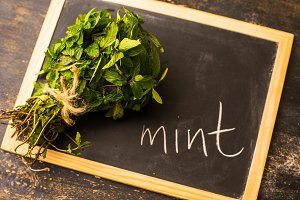 Fresh mint herb