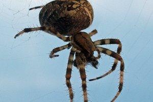 Spider Close Up