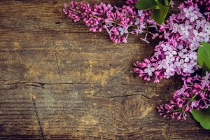 Lilac horizontal background