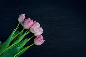 Bunch of spring pink tulips