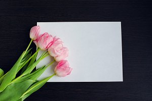 Tulips on sheet of paper