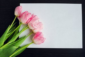 Tulip flowers and blank white paper card