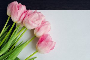 Pink tulips and blank paper or letter