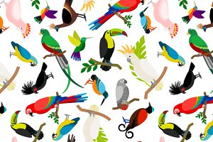 Parrots colored pattern