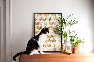 Framed Poster on a Piano with a Cat