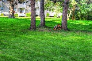 Green yard - Backyard